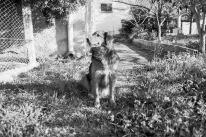 very friendly stray dog