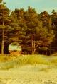 woodlands cabnin, mirrowing the sea